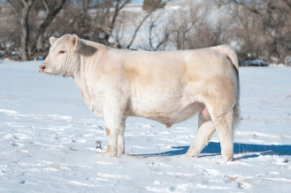 Sellman Blackhills Stock Show Sale Consignment