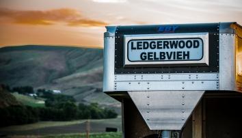 Ledgerwood Gelbvieh, Clarkson, WA