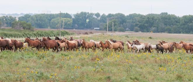 Jamison Ranch, Quinter, KS