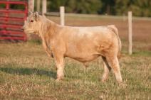 Zuck Cattle, IA